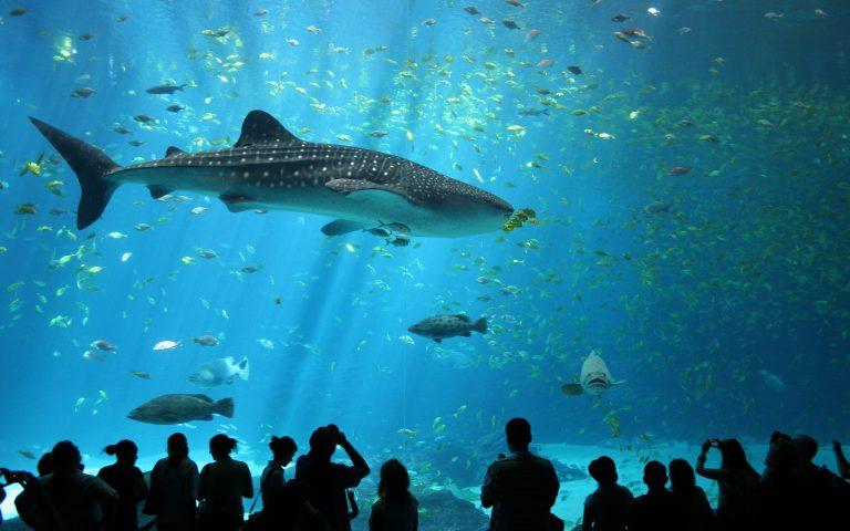 Sea-Aquarium-Kesari-Tours