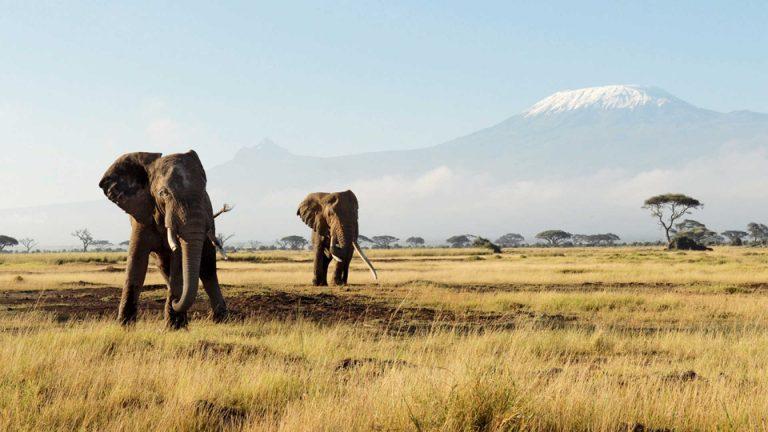 Kenya-Kesari-Tours | visa on arrival for indian