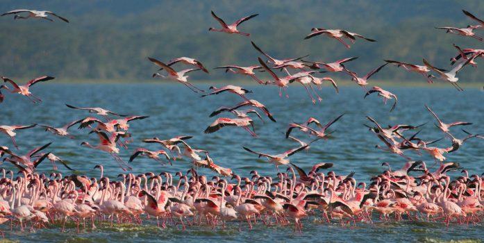 Lake Nakuru National Park | Kenya safari packages kesari