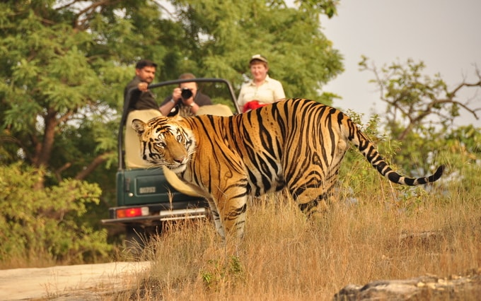 Jim Corbett National Park kesari tours | national parks in india