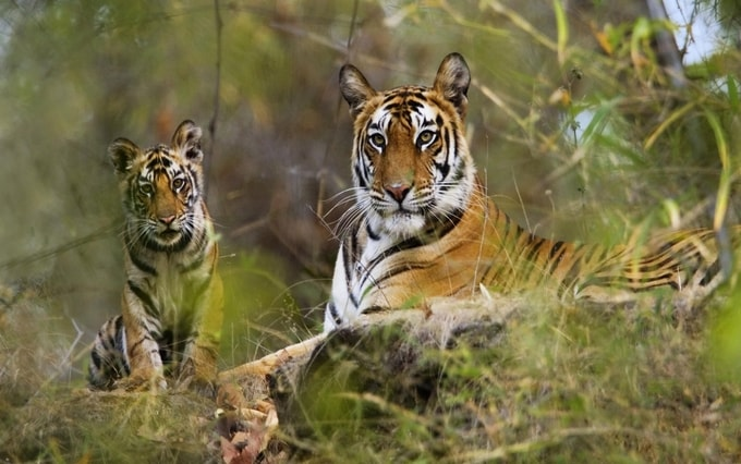 Sunderban National Park kesari tours | national parks in india