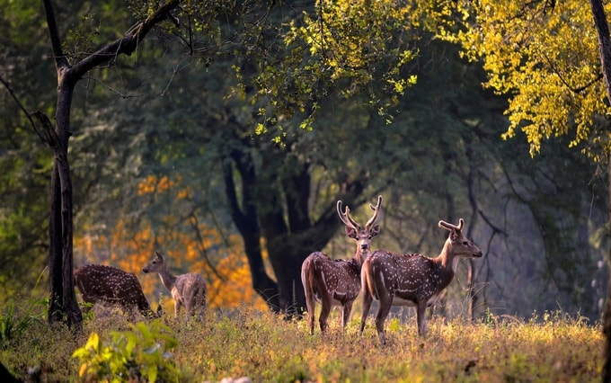 Kanha National Park of India Kesari tours | national parks in india