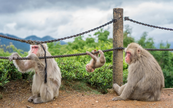 monkey-park-Kesari-Tours