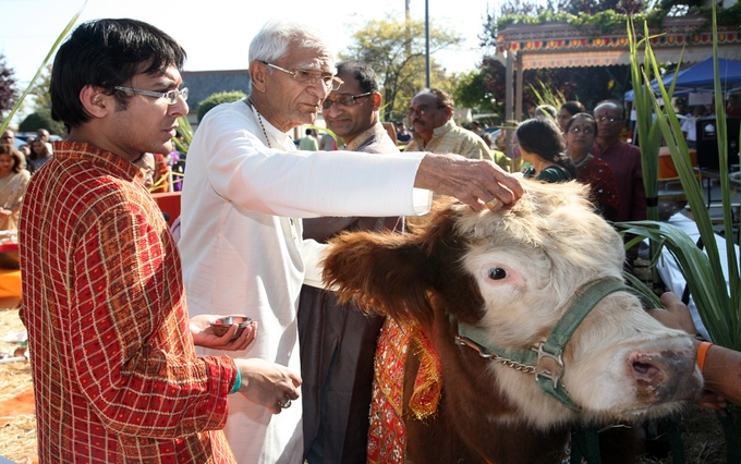 diwali-celebration-with-an-aarti-of-cow-and-calf-kesari-tours