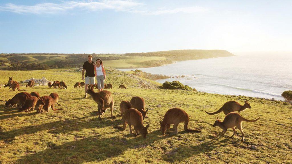 Kangaroo Island - kesari tours to visit famous places in Australia