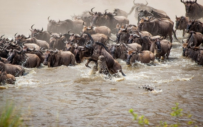 The Great Migration - Wild beast Migration in Africa