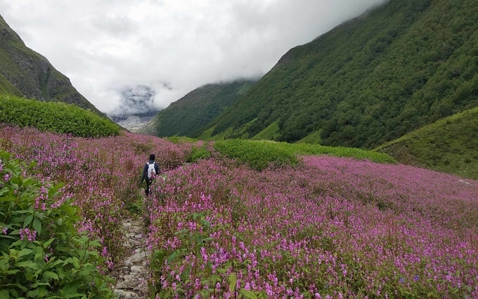 Uttarakhand Trek to Valley of Flowers
