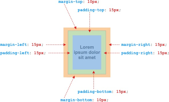 Minh họa margin và padding