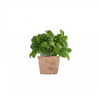 Genovese Basil D-I-Y Garden Kit