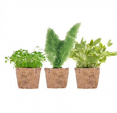Set of 3 D-I-Y Garden Kit