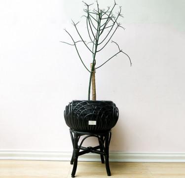 Alon Statement Piece XS Black Plant Stand