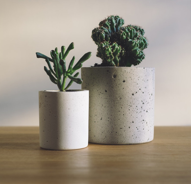 Indoor Plants: Cacti