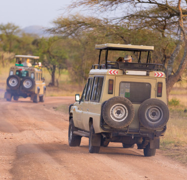 African Game Drive