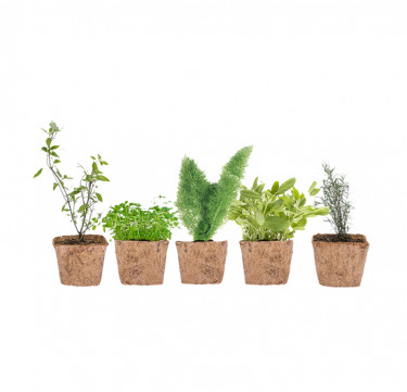 Set of 5 D-I-Y Garden Kit