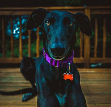 Personalized Dog Bone Tag