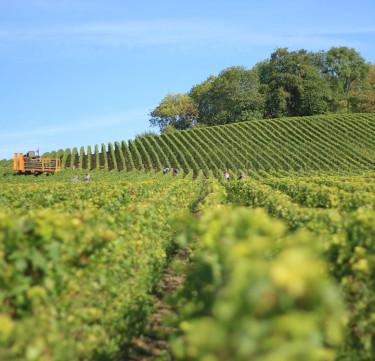 Wine Tasting & Winery Tour