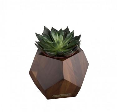 Accent Succulent Pot