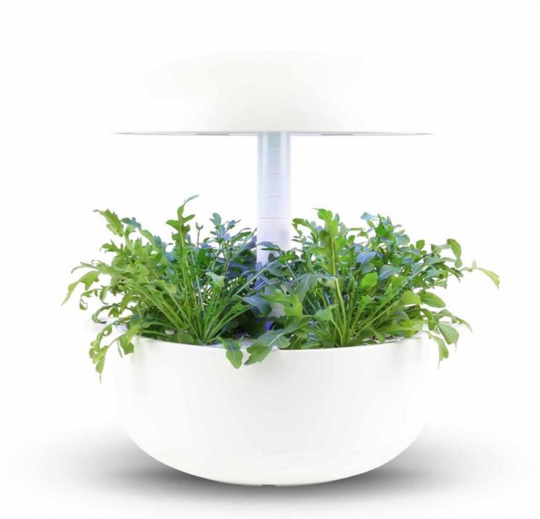 Wild Rocket Plantui Plant Capsules™