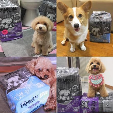 Absorb Plus Pet Sheets Reviews
