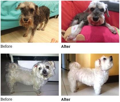 Testimonial from Dog Owner