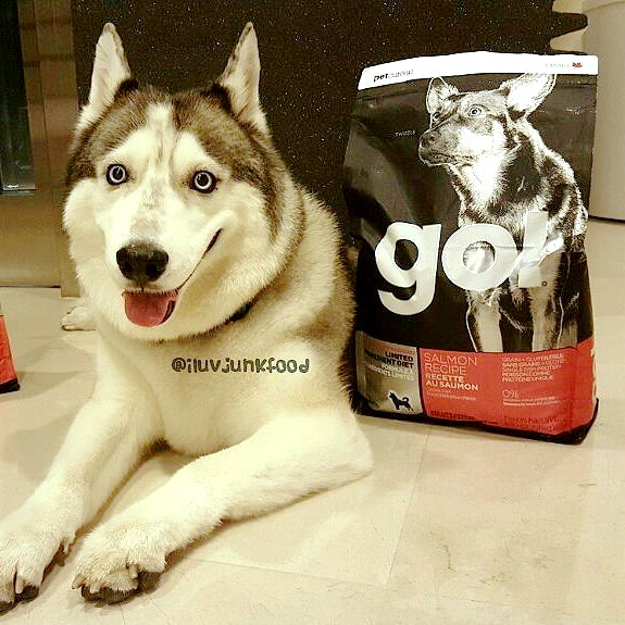Go! Dog Food Reviews