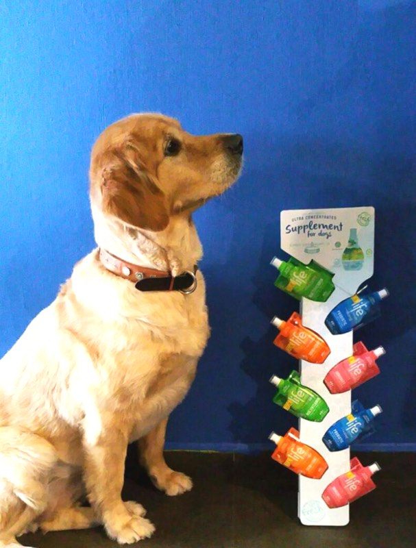 Why Should You Give Supplements To Your Dog?
