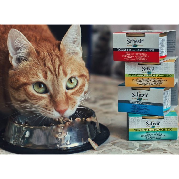Schesir 100% Natural Cat Food