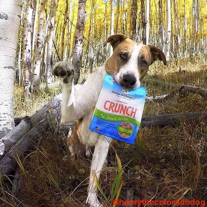 Stella & Chewy's Carnivore Crunch Freeze-Dried Dog Treats