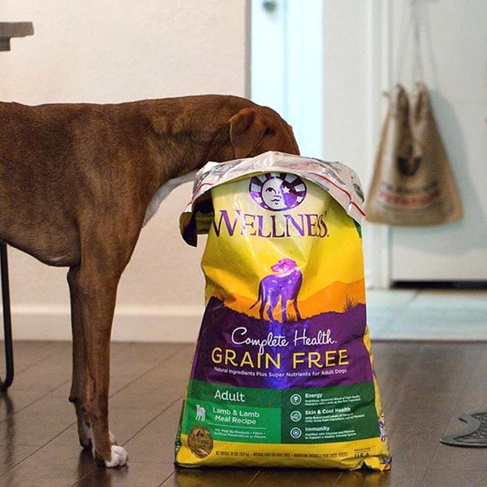 Wellness Complete Health Dog Food