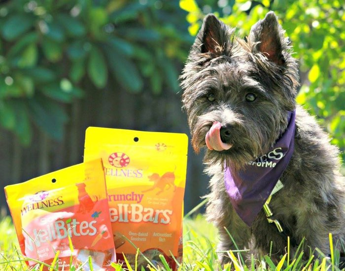 Wellness Dog Treats - Healthy Snacking, Happy Dogs!