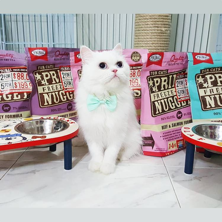 NEW! Primal Pork and Duck Freeze-Dried Raw Cat Food