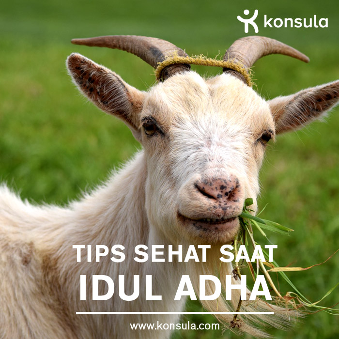 posting_iduladha copy