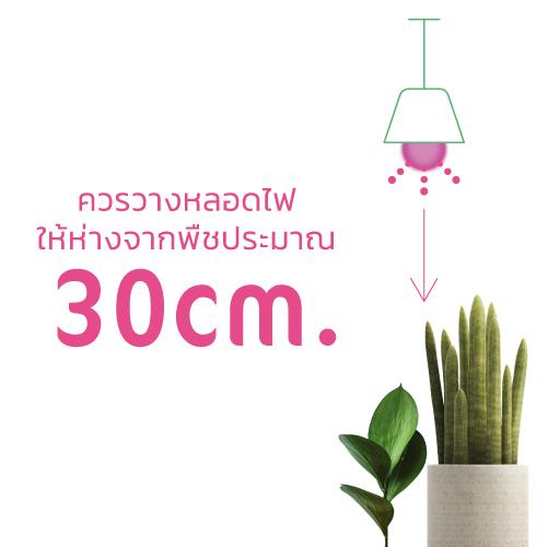 Bulb plant grow web6