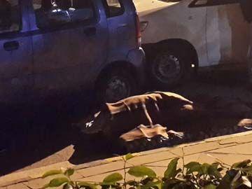 Arvind_Kejriwal_sleeping_on_road_360_-_Copy___20140121060854___.jpg