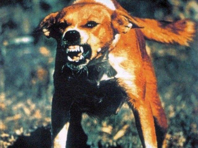 rabid-dog-640x480___20141122030721___.jpg