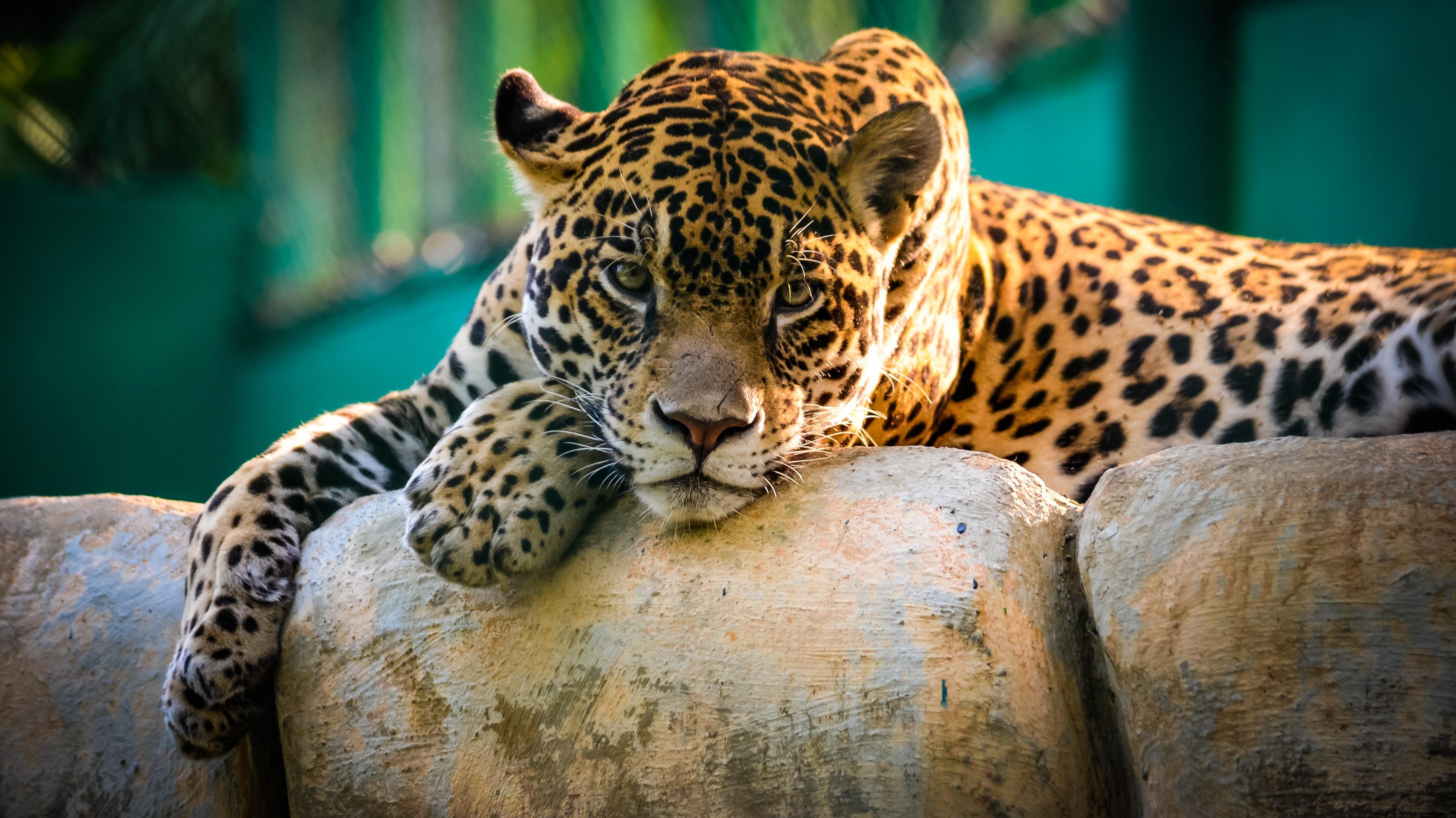 jaguar_mexico-3840x2160_07022018090359.jpg
