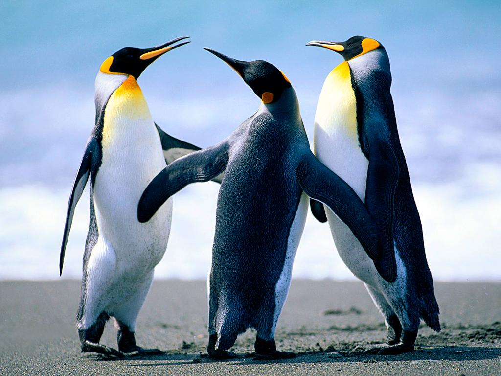 Penguins_17012018095835.jpg