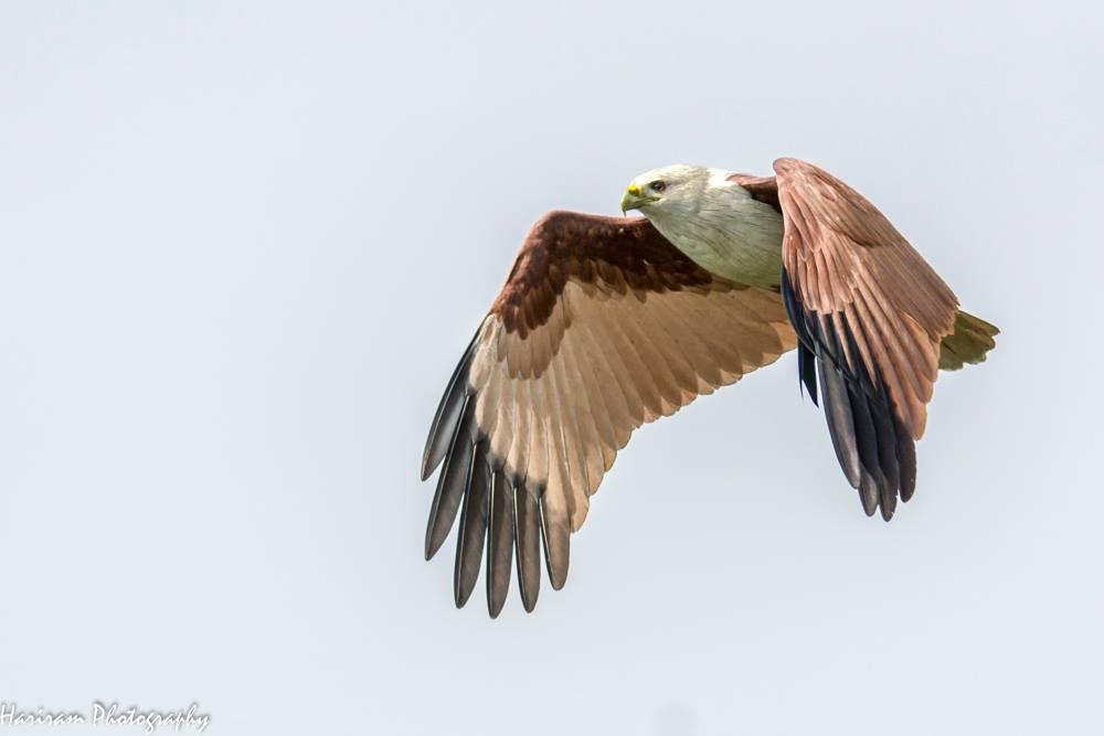 falcon_03072019033205.jpg