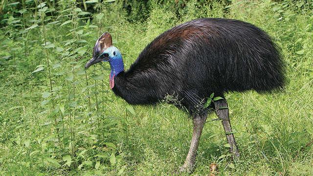 Top 10 Burung Paling Berbahaya Di Dunia Indo Ranking