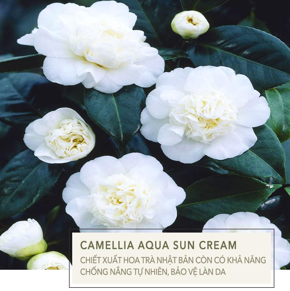 Hình ảnh 5 | Chứa hơn 10 loại dầu dưỡng, Okame Sun Cream chính là kem chống nắng tốt nhất hè này | Lixibox