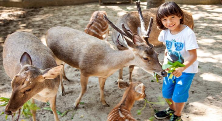 Bali Zoo : Zoo Explorer - Background