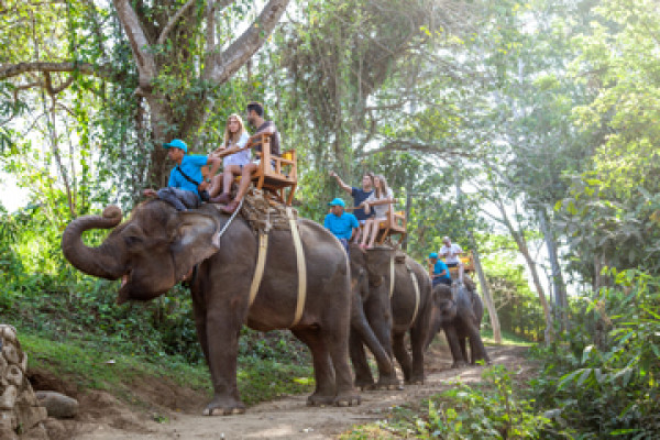 Bali Zoo Elephant Expedition Package - Background