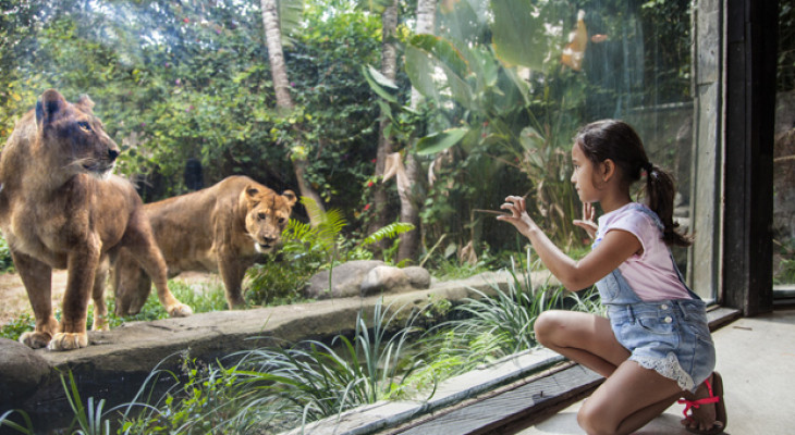 Bali Zoo Park - Domestic Tourist
