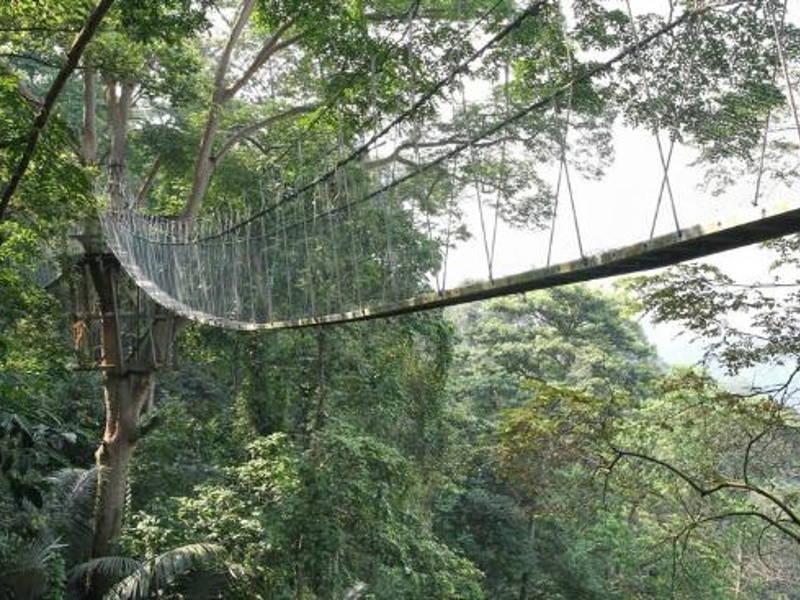 KL canopy walk