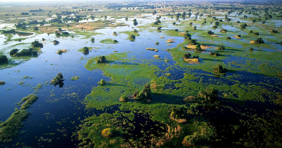 Aerial view of Okavango Delta's permanent floodplains, Botswana