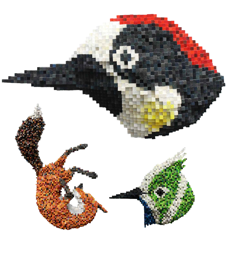 luxuo-id-digital-love-acorn-woodpecker-falling-fox-bluebearded-hammercrest