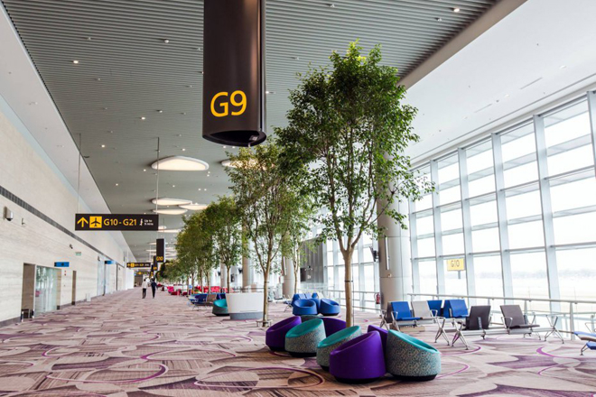 Boulevard of Tree - Image courtesy Changi Airport Group