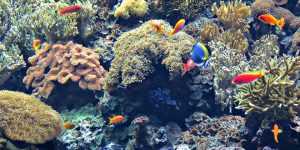 """""""Our Singapore Reefs: Marine Clean Up and Coral Rescue"""" by SeaKeepers Society promotes marine conservation"""
