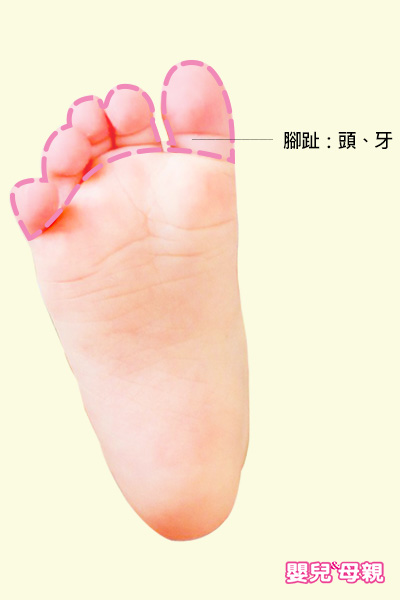 按摩寶寶腳趾,可以舒緩頭痛、牙痛