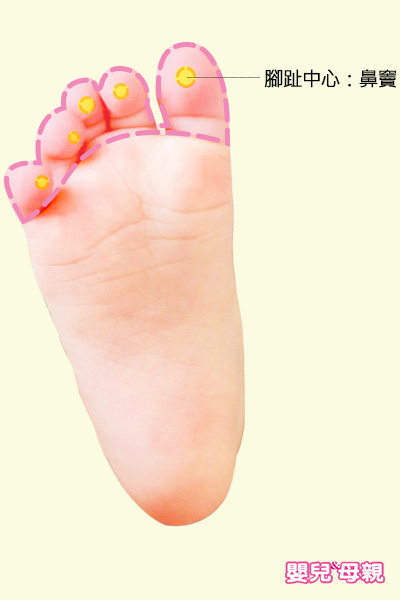 腳趾的中心點所對應的部位為鼻竇,可以用來緩解寶寶鼻塞、流鼻涕或其他呼吸問題。